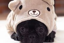 Pug Costumes / Pugs in outfits! Pug in costumes! Costumes for pugs and the people who like dressing them up.