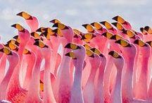 colourful animals