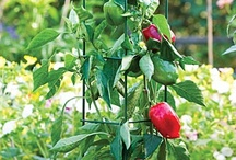 Gardening info / Non- whimsical tips and info / by Dianne Sterling