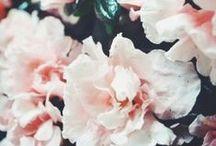 cute little things / by Lynn Tofil