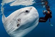 Animales marinos / Actualidad y curiosidades sobre criaturas marinas / by Vista al Mar
