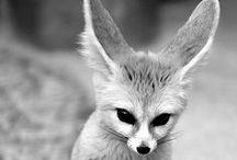My friend, the fox. / by Allie Bordeaux