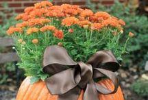 fall & thanksgiving.