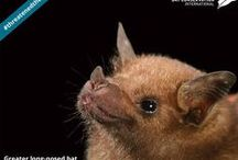 Wild About Bats! / This month we are partnering with Bat Conservation International to share amazing bat facts with you!