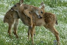 Baby animals etc / by Erin McCarthy
