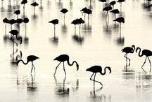 Birds / by Hanna Hine