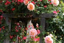 Garden inspiration / by Erin McCarthy