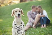 Save the Dates / by Wedding Guide Chicago