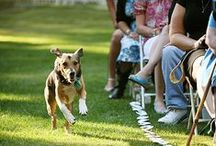 Pet Weddings / Because pets are people too!