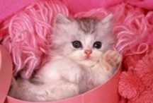 Cute as a Kitten ❤ / I've always been partial to cats...their independence, their ease of care, their indifference! lol  I ♥ kitties!! / by Debbie Orcutt