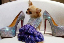 Heel Hierarchy / Just because I can't wear them...doesn't mean I don't want to. Here are a few I love ♥♥ / by Debbie Orcutt