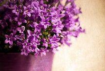 Color inspiration ~ Purple