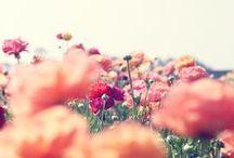 Flowers! / by Kimberly Silva