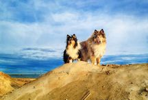 Lassie & Candy