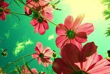 What a wonderful world  / Flowers Nature Animals / by Carla Baldassari