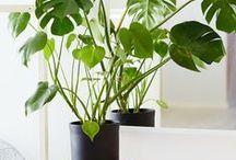 home -- plants / by Stephanie Ward