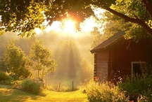 Good Day, Sunshine / by Cindy Remacle