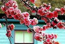 Flowers&Foliage / by FatLip 76