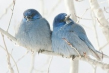 Bluebirds / by Cindy Remacle