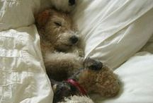 foxie & friends / love for my wire fox terrier. (and other doggies)