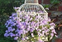 Birdcages / by Cindy Remacle