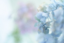 Beautiful Blues / by Cindy Remacle