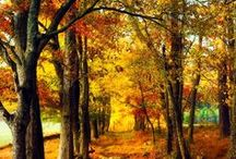 Autumn / by Cindy Remacle