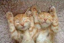 Gatti e Felini