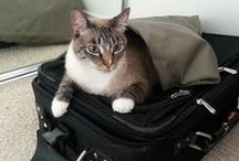 Traveling with Pets /   / by Peter Greenberg