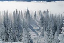 Snowshoeing / Grab a pal and walk through a winter wonderland!  / by REI