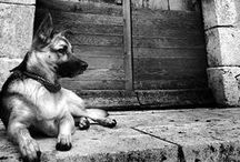 If I had a dog / by Luis Guillen