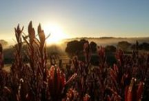 FLEURIEU PENINSULA / A beautiful tranquil place high up on the hills. Photography is my own.