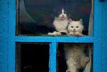 Meow! / by Brina Atkins