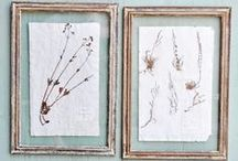 Science & Nature / Inspired by botanical themes, herbariums and scientific vessels