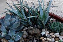 AZ Gardening / by Shannon Welch