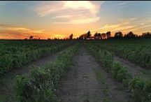 Wine produced #Easterntownships