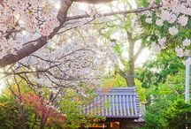 Dream life / My dream is to move to Japan