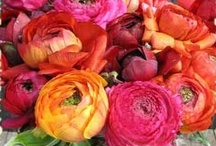 Bouquets!! Pretty!! / by 🌺~allthingsshabby~🌺