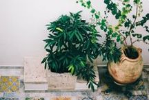 Home: Plants, Gardens, & Outside / bring your creativity outside