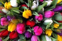 Nature, Plants, Flowers...