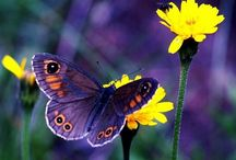 Butterfly / There is something special with butterflies.