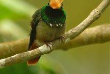 Birds / All types of birds!