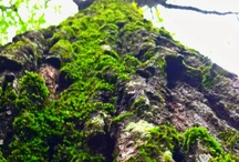 Trees / I love me some trees, roots, holes, moss growing on them. Just about any unusual one grabs my eye. / by Melanie Farmer