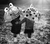 Fresh Let it Rain!