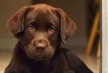 gimme all da pups / by Jessica Barton