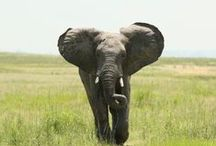 African Wildlife / The incredible animals that Southern Africa has to offer!