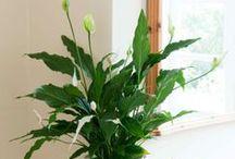 Gardening & Houseplant Tips  / by Catherine Broussard
