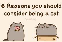 My Kitty Catz...... <3<3 / I love cats....I think they are the funniest creatures!