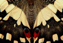 Butterfly wings, insects & other fun things