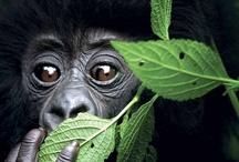 Primates / by Catherine Broussard